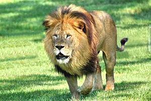 Lion Country Safari - West Palm Beach